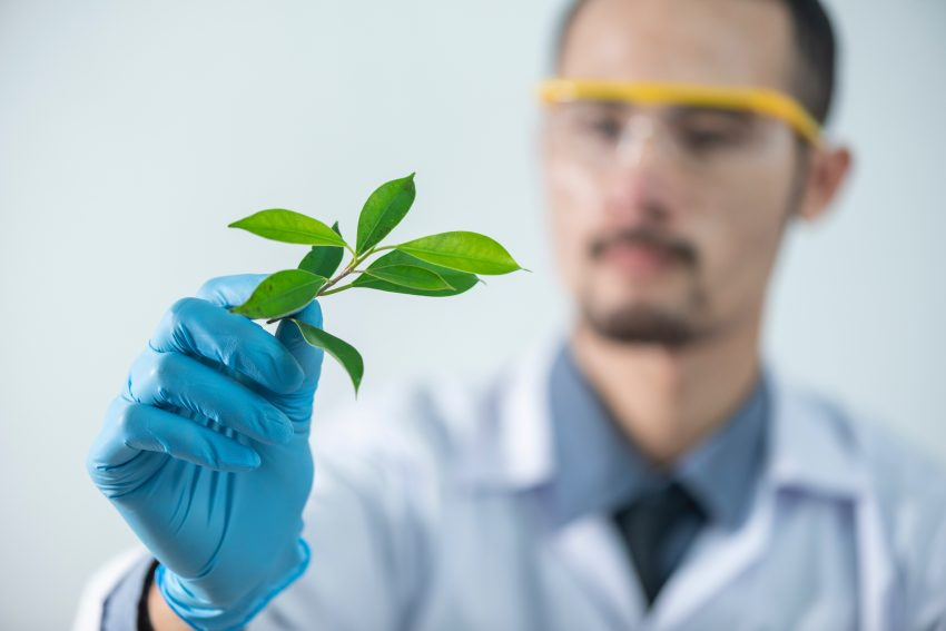 scientist reasearch plants serotonin